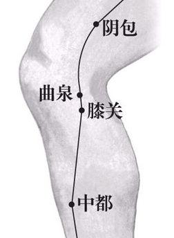 曲泉穴位位置图