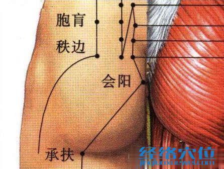 会阳穴的位置及解剖图