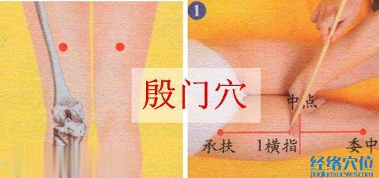 殷门穴的位置及取穴示范图
