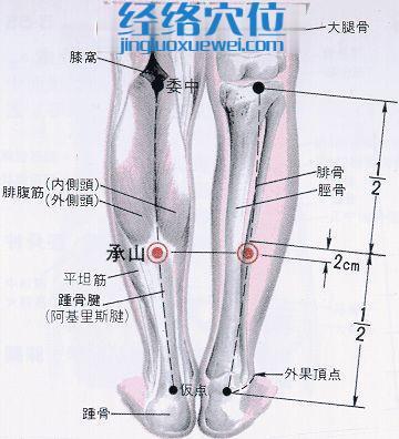 承山穴的位置及解剖分析图