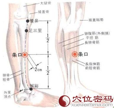 条口穴的位置解剖分析图