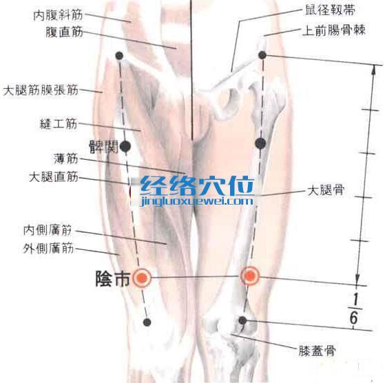 阴市穴的位置解剖分析图