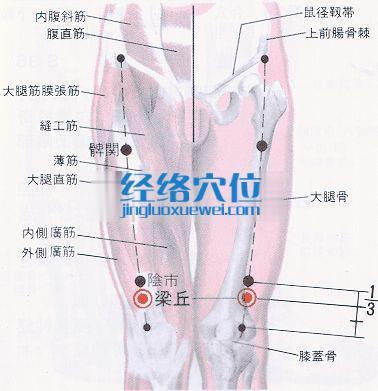梁丘穴的位置解剖分析图