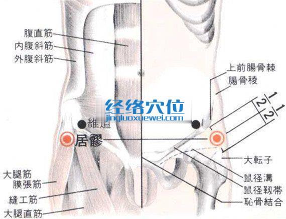居髎穴的位置解剖分析图