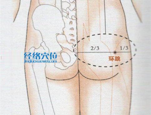 环跳穴的准确位置图