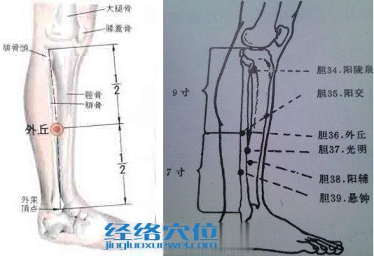 外丘穴的位置解剖分析图