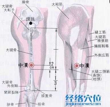 中渎穴的位置解剖分析图