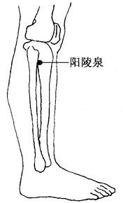 阳陵泉穴位位置图