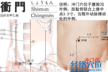 (原创)人体穴位一胸部腹部(52)冲门穴
