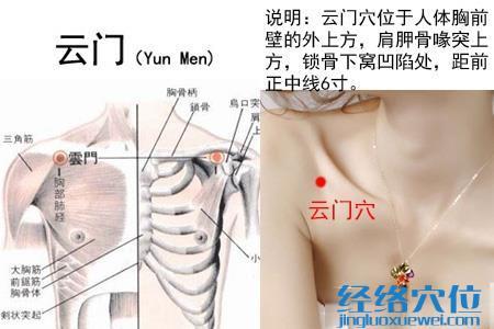 (原创)人体穴位一胸部腹部(43)云门穴
