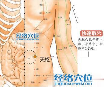 天枢穴的准确位置图