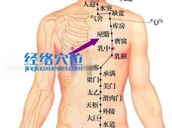 胃经屋翳穴位图