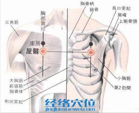 屋翳穴的位置解剖分析图