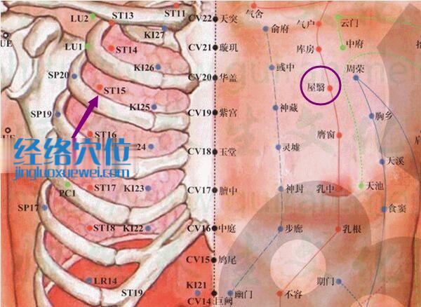屋翳穴的位置解剖分析图解