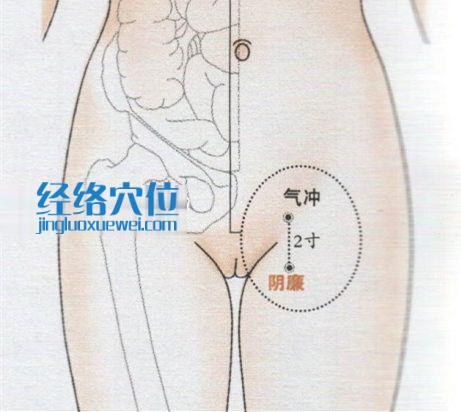 气冲穴位位置图