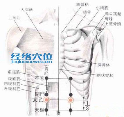 太乙穴的位置解剖分析图