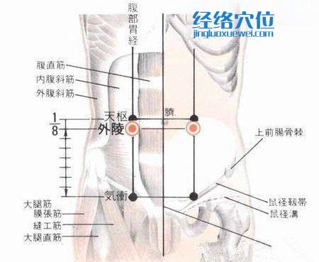外陵穴的位置解剖分析图
