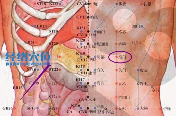 梁门穴的位置解剖分析图