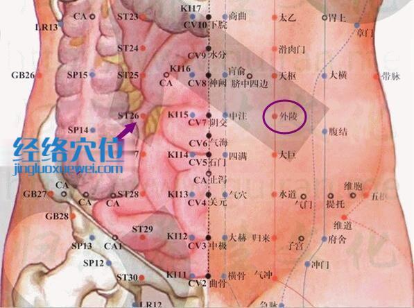 图解外陵穴的位置及解剖分析图