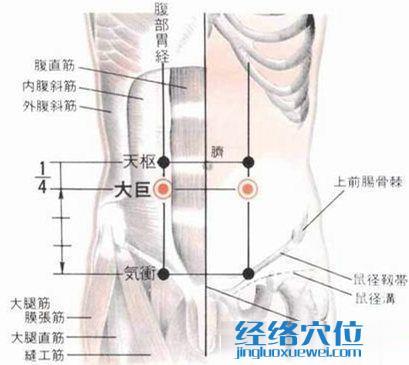 大巨穴的位置解剖分析图