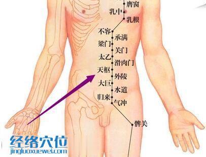 足阳明胃经天枢穴位图