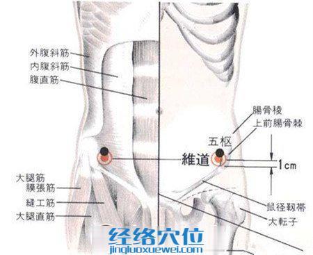 维道穴的位置解剖分析图
