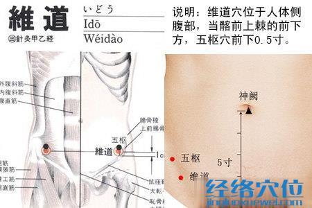 维道穴的位置图