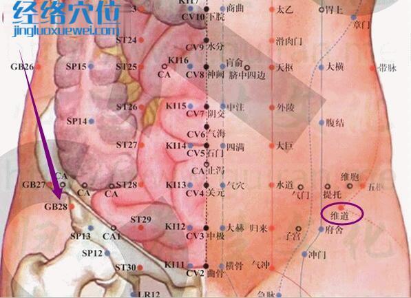 维道穴的准确位置图