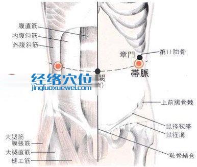 带脉穴的位置解剖分析图