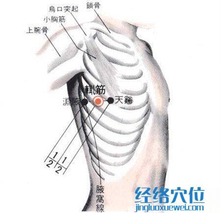 辄筋穴的位置解剖分析图