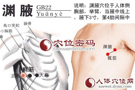 渊腋穴的位置解剖分析图