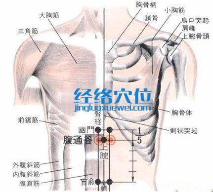 腹通谷穴的位置解剖分析图