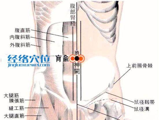 肓俞穴的位置解剖分析图