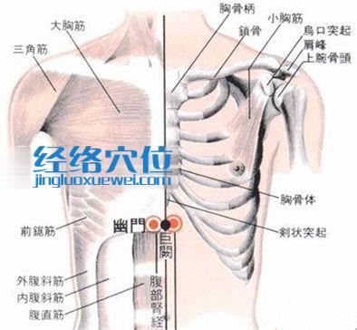 幽门穴的位置解剖分析图