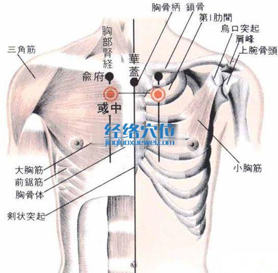 彧中穴的位置解剖分析图