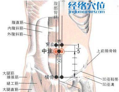 中注穴的位置解剖分析图