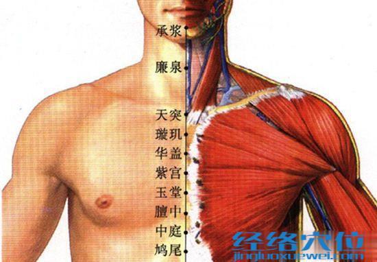 紫宫穴位位置图