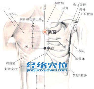 紫宫穴的位置解剖分析图