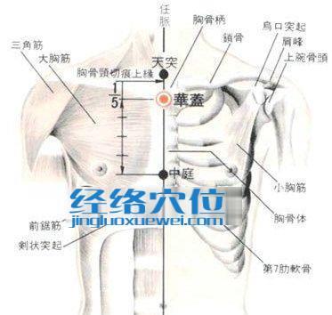 华盖穴的位置解剖分析图