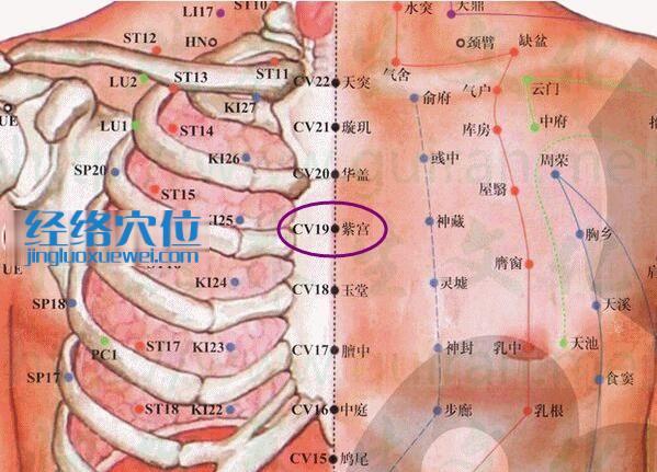 紫宫穴的准确位置图