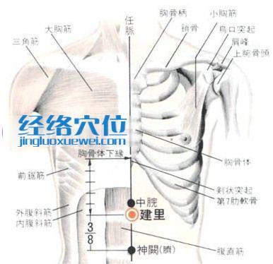 建里穴的位置解剖分析图