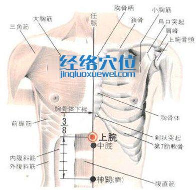 上脘穴的位置解剖分析图