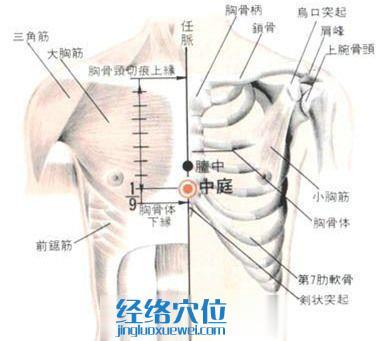 中庭穴的位置解剖分析图