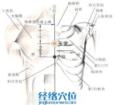 玉堂穴的位置解剖分析图