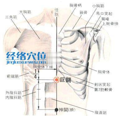 巨阙穴的位置解剖分析图