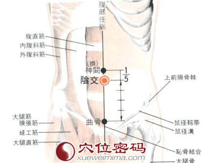 阴交穴的位置解剖分析图