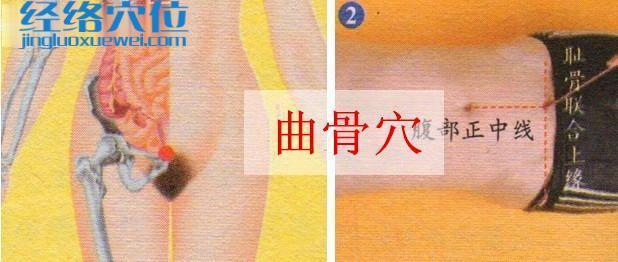 曲骨穴的取穴方法示范图