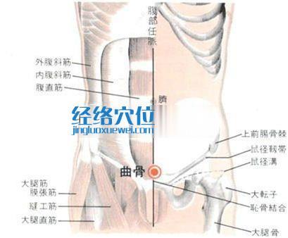 曲骨穴的位置解剖分析图