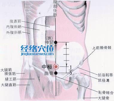 中极穴的位置分部分析图
