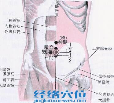 气海穴的位置解剖分析图